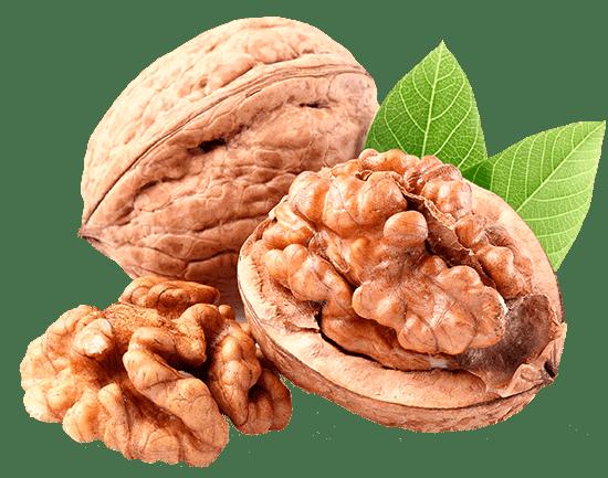 nuces